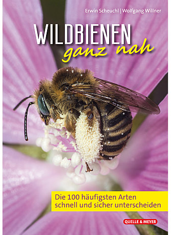 SCHEUCHL/WILLNER, WILDBIENEN GANZ NAH