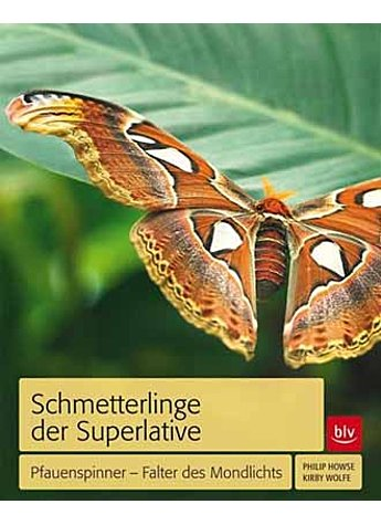 SCHMETTERLINGE DER SUPERLATIVE WOLFE/HOWSE
