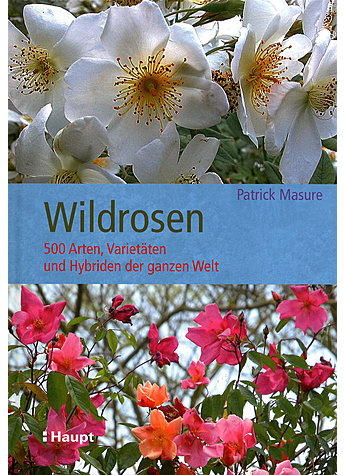 WILDROSEN - PATRICK MASURE